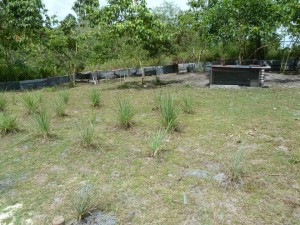Agriculture Project